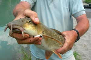 Regulations and Fishing Permits